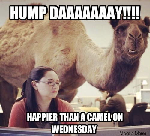 Geico Happy Hump Day Images Geico camel hu... happy hump